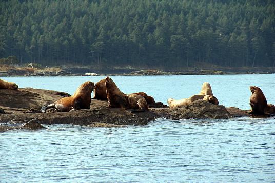 Excursions d'observations des baleines et des otaries