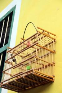 Les chants d'oiseaux font partie des spécialités de Trinidad