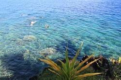 Fidji est réputé pour la plongée. Ici, on plonge juste au pied de l'hôtel Paradise Taveuni.