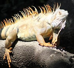 L'excursion dans le parc national Palo Verde permet d'apercevoir plusieurs espèces.