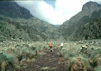 Le parc national du Ruwenzori
