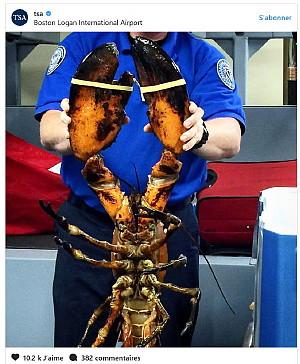 Un agent de sécurité attrappe un homard de 20 livres à l'aéroport de Boston