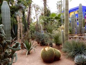 Au jardin Majorelle