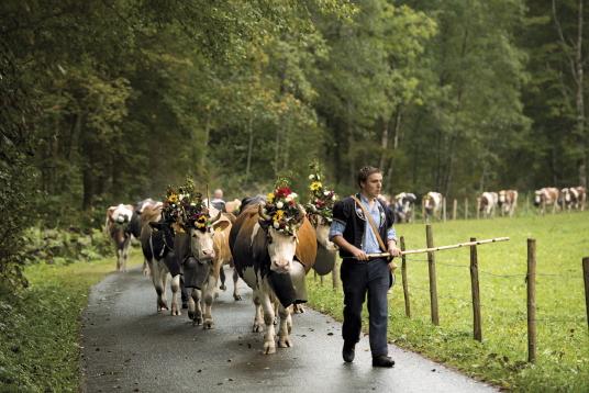 Désalpe des vaches à Charmey. Crédit photo : Suisse Tourisme/Gian Marco Castelberg & Maurice Haas