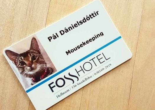 Un hôtel islandais recrute un chasseur de rongeurs