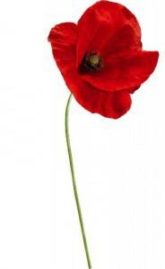11 novembre, jour du souvenir
