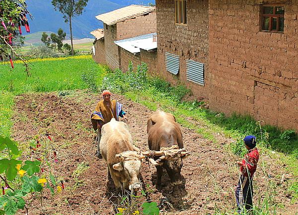 La Vallée sacrée sert encore de grenier, pour plusieurs communautés